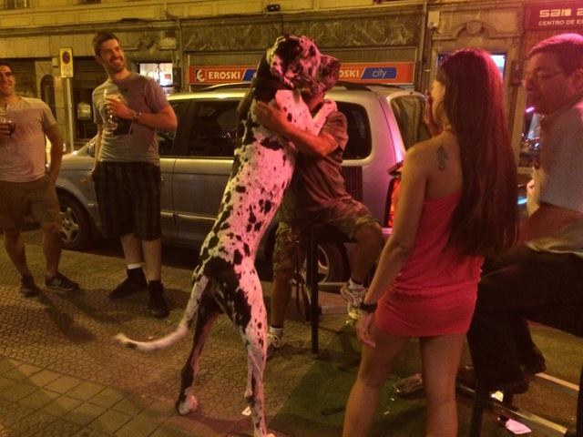 Verdens største hund. Foto: Martin Østtveit