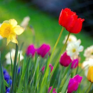 Vårturnering